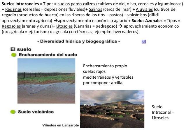 Los suelos y vegetaci n for Suelo pedregoso