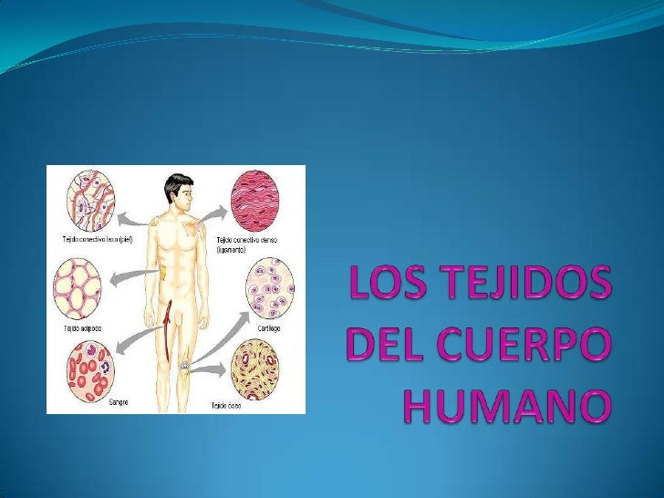 Los tejidos humanos power point
