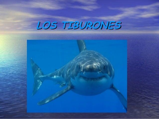 LOS TIBURONESLOS TIBURONES