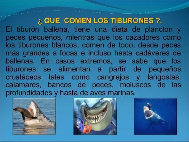 Los tiburones omar nueva for Como se cultivan los peces