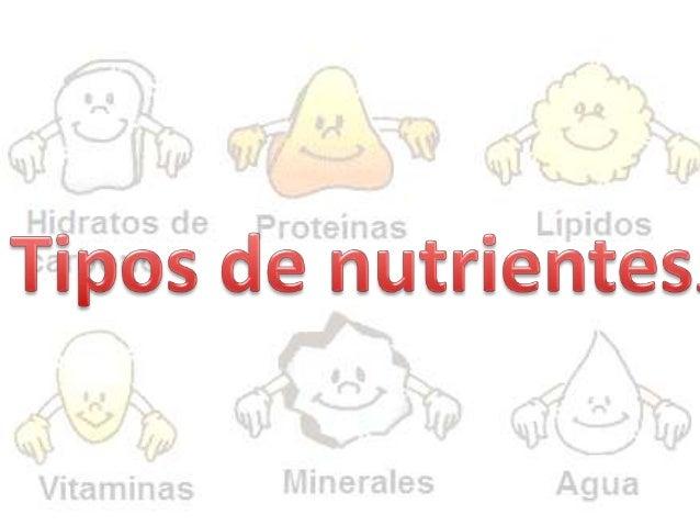 Tipos de nutrientes.