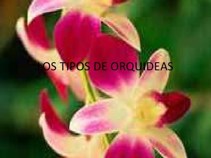 LOS TIPOS DE ORQUIDEAS<br />