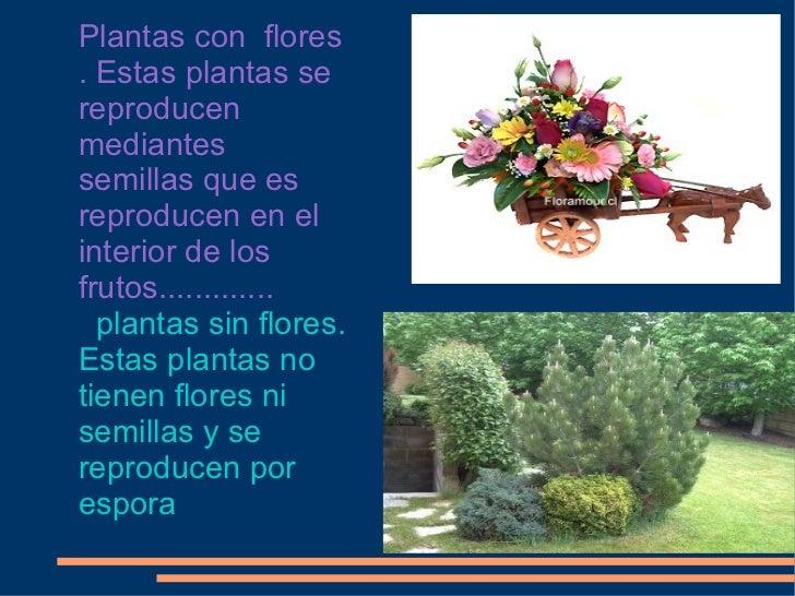 plantas con flores estas plantas se reproducen mediantes semillas que