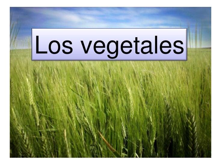 Los vegetales<br />