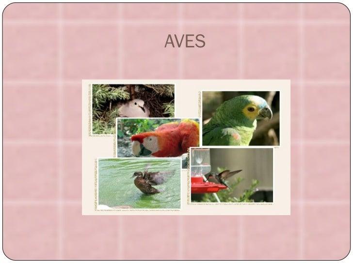 AVES aves.jpg