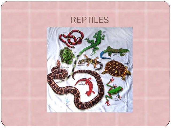 REPTILES reptiles-973607.jpg