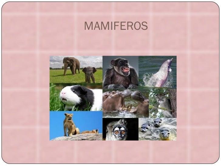 MAMIFEROS MAMFER~1.JPG