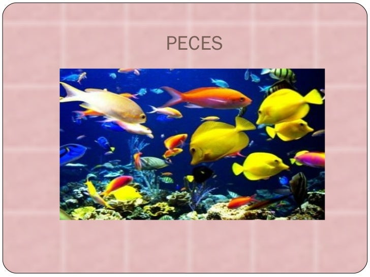 PECES peces.jpg