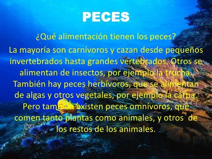 Los vertebrados grupo micaela for Peces alimentacion