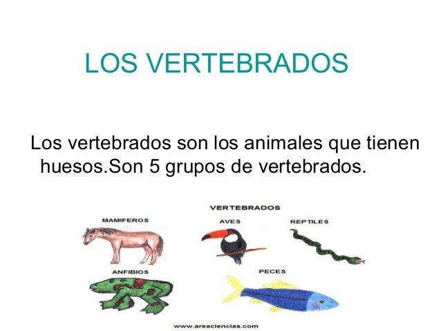 LOS VERTEBRADOS  Los vertebrados son los animales que tienen  huesos.Son 5 grupos de vertebrados.