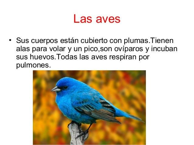 Las aves  • Sus cuerpos están cubierto con plumas.Tienen  alas para volar y un pico,son ovíparos y incuban  sus huevos.Tod...