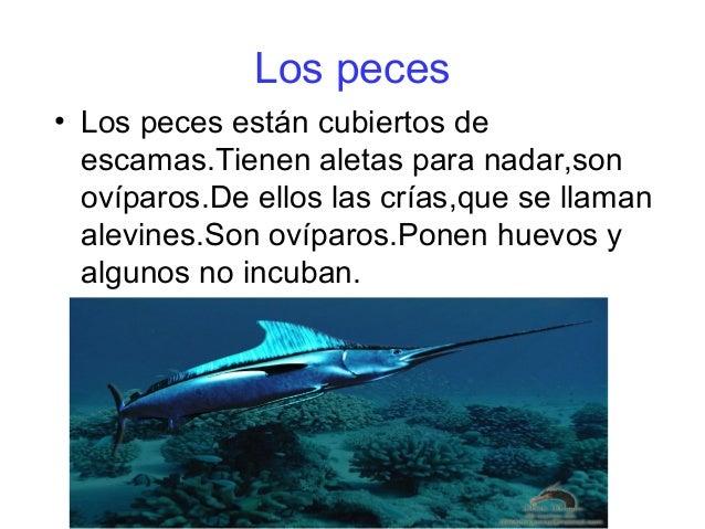Los peces  • Los peces están cubiertos de  escamas.Tienen aletas para nadar,son  ovíparos.De ellos las crías,que se llaman...