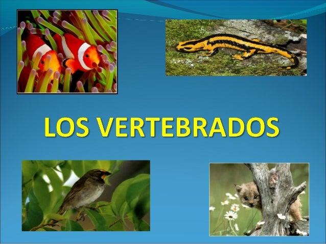 Los animales vertebrados tienen  esqueleto interno  Pueden ser ovíparos y vivíparos