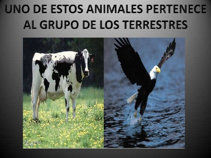Animal que no es vertebrado?