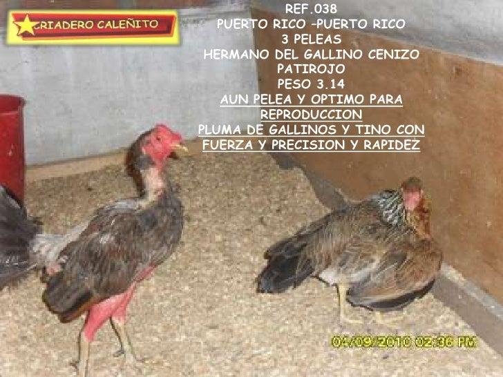 Lote Septiembre De 2010 Gallos Y Gallinas Buena Seleccion Exclusiva