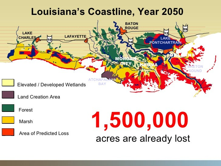 the loss of coastal wetlands essay While the nation as a whole gained freshwater wetlands from 1998 to 2004, a  new report documents a continuing loss of coastal wetlands in.