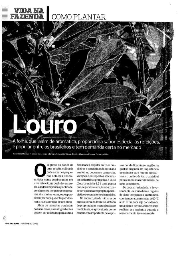 Revista Globo Rural - Como Plantar Louro