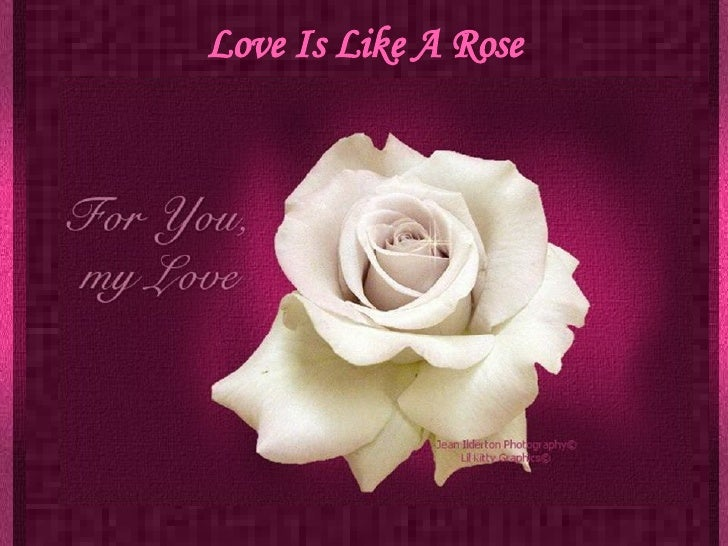 Love Is Like A Rose