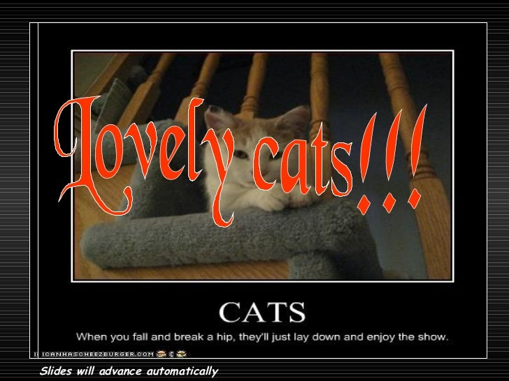 Lovely cats!!! Slides will advance automatically
