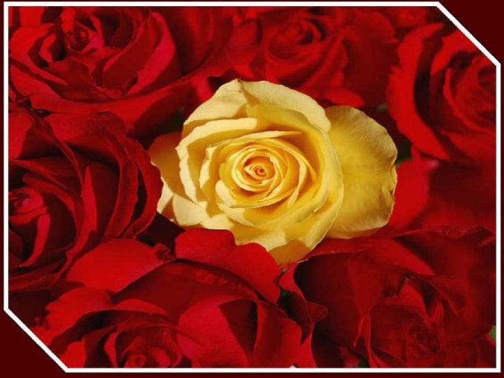 lovely roses. Black Bedroom Furniture Sets. Home Design Ideas