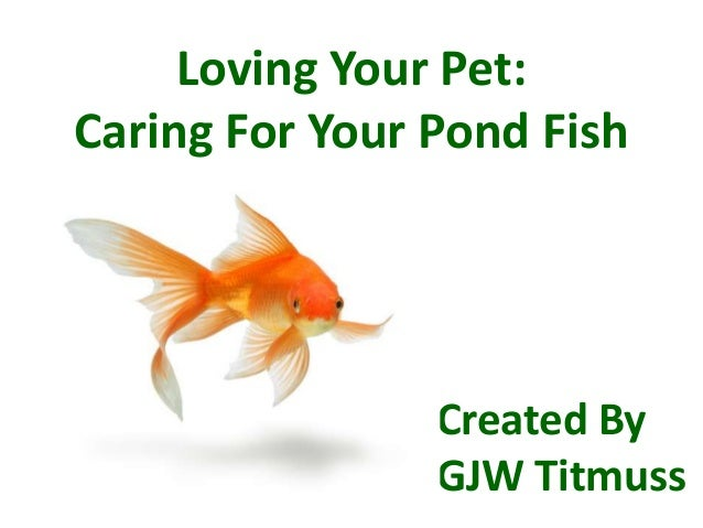 Loving Your Pet: Caring For Your Pond Fish Created By GJW Titmuss