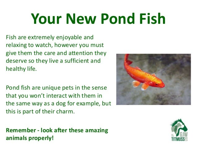 Loving Your Pet Caring For Your Pond Fish