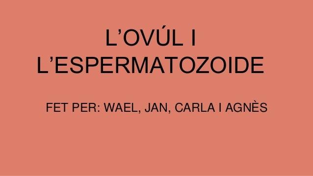 L'OVÚL I L'ESPERMATOZOIDE FET PER: WAEL, JAN, CARLA I AGNÈS