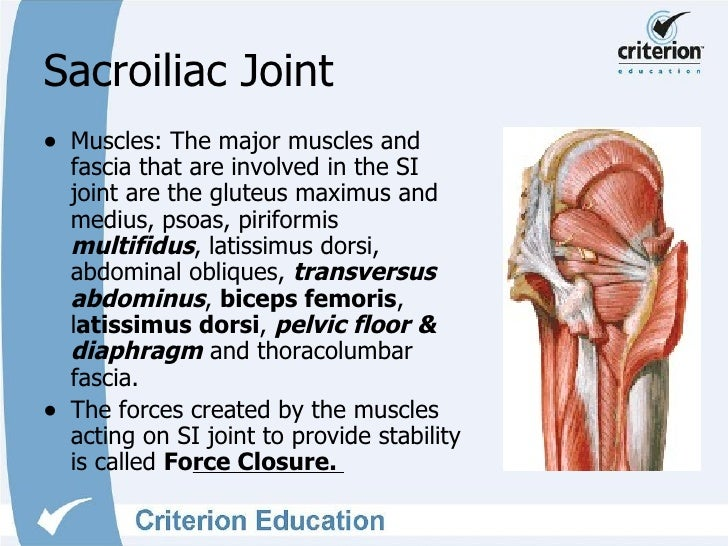 Sacroiliac Joint Anatomy Images Human Body Anatomy