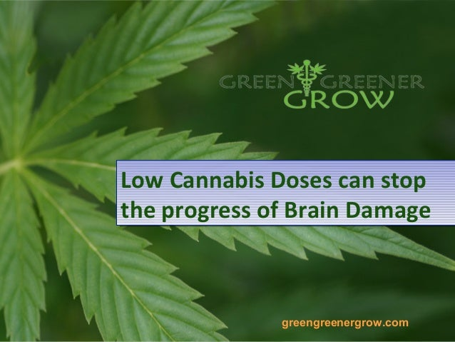 Low Cannabis Doses can stopthe progress of Brain DamageLow Cannabis Doses can stopthe progress of Brain Damagegreengreener...