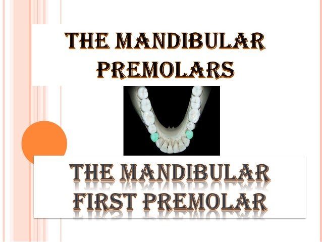 POSITION :  The mandibula r first premolar is situated between the canine and second premolar