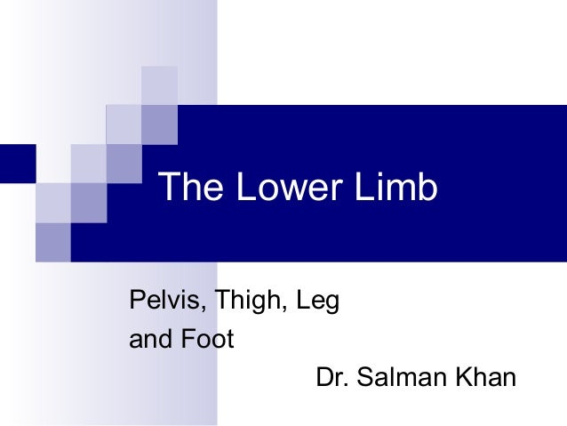The Lower LimbPelvis, Thigh, Legand Foot                Dr. Salman Khan