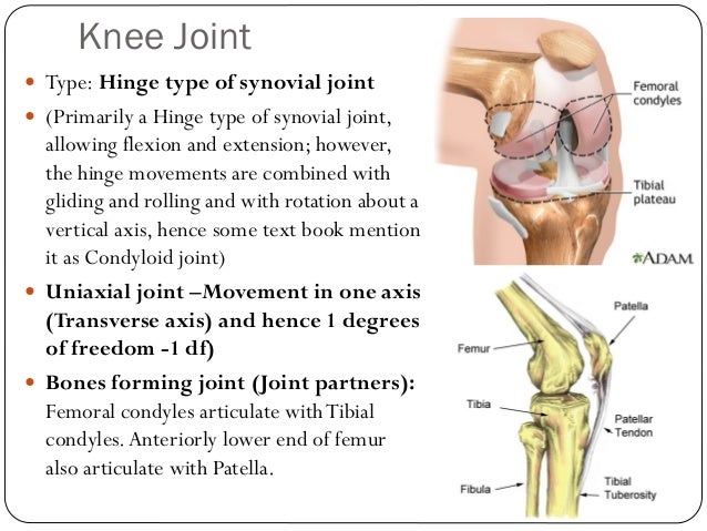 Lower limb bones joints muscles drbbgosai knee ccuart Image collections