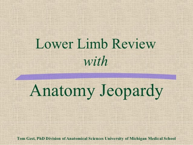 Lower Limb Review                with      Anatomy JeopardyTom Gest, PhD Division of Anatomical Sciences University of Mic...