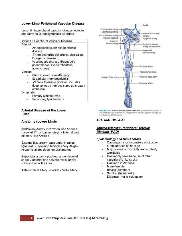 Lower limb peripheral vascular disease