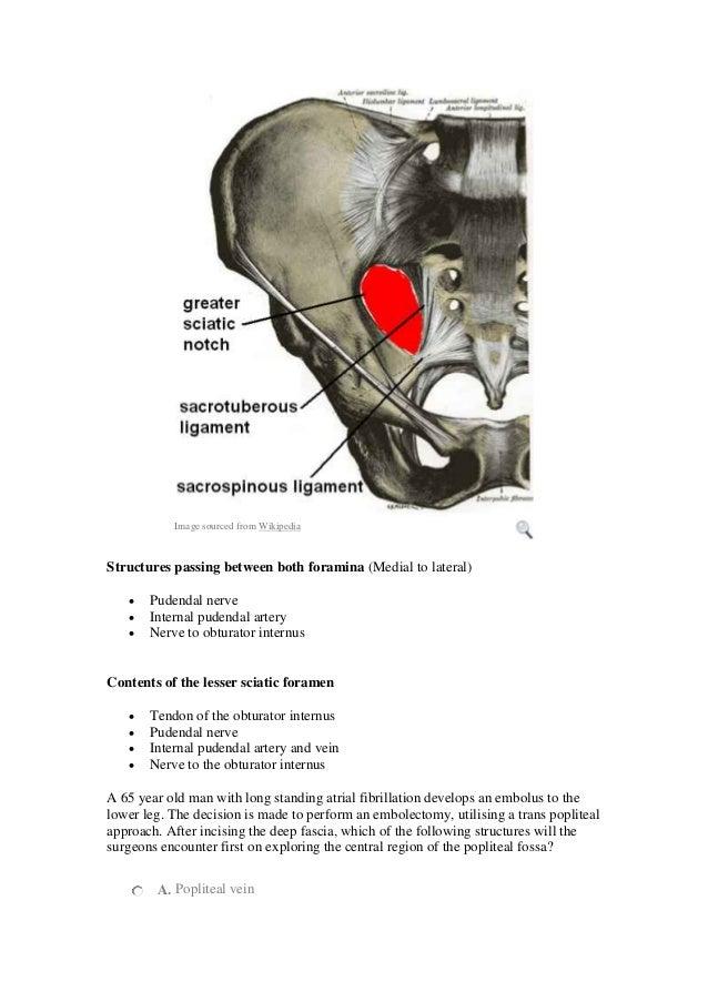mrcs preparation emrcs questions lowerlimb, Muscles
