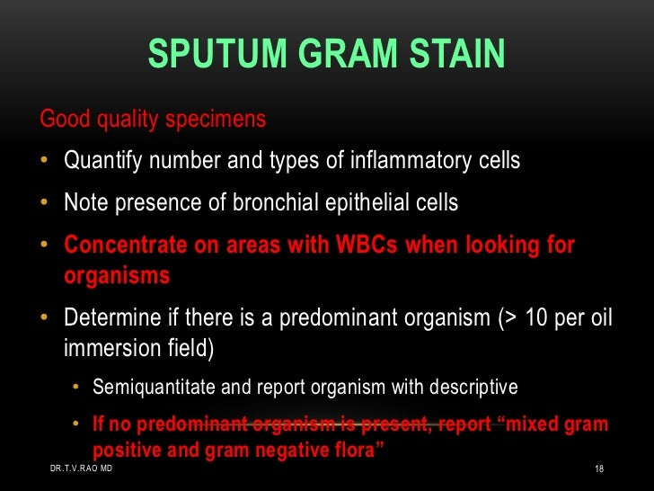 SPUTUM GRAM STAINGood quality specimens• Quantify number and types of inflammatory cells• Note presence of bronchial epith...