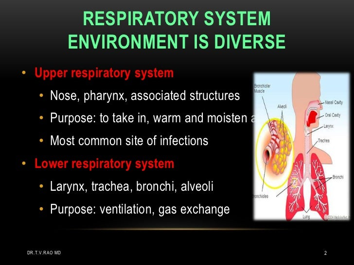 RESPIRATORY SYSTEM                 ENVIRONMENT IS DIVERSE• Upper respiratory system     • Nose, pharynx, associated struct...