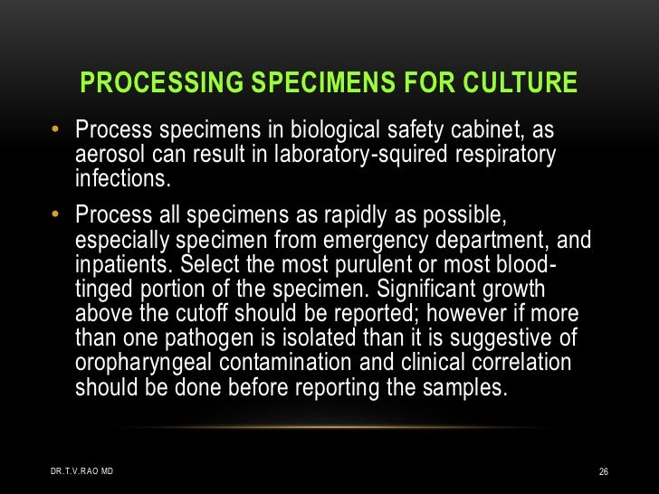 PROCESSING SPECIMENS FOR CULTURE• Process specimens in biological safety cabinet, as  aerosol can result in laboratory-squ...