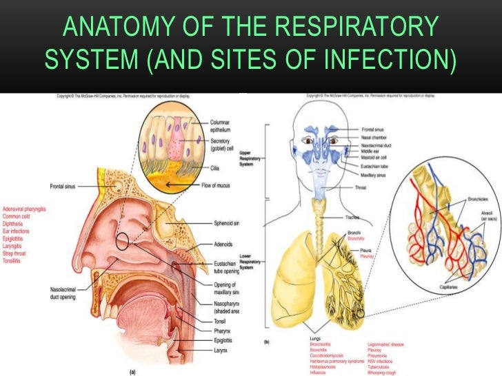 Lower Respiratory Infections Bacteriological Diagnosis
