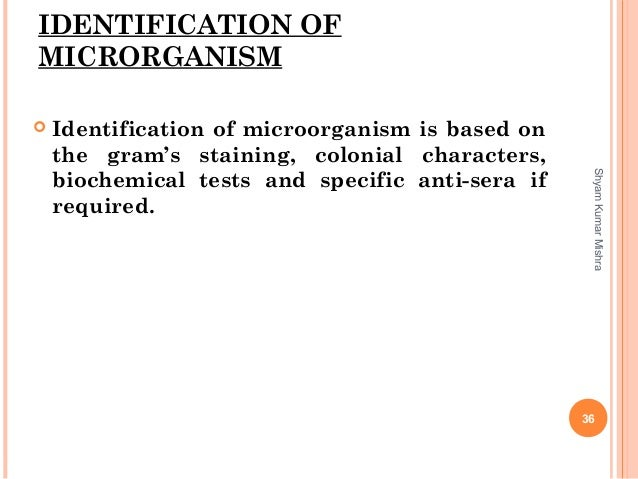 IDENTIFICATION OF MICRORGANISM  Identification of microorganism is based on the gram's staining, colonial characters, bio...