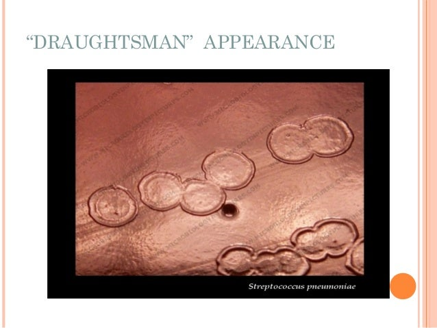 """""""DRAUGHTSMAN"""" APPEARANCE"""
