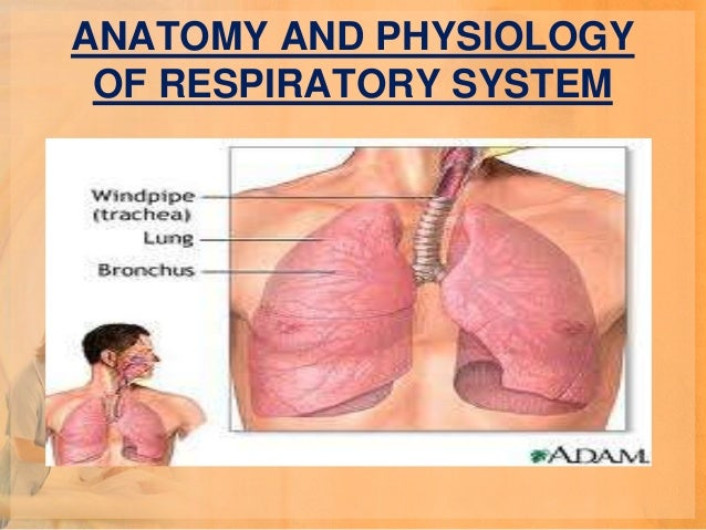an introduction to bronchitis an inflammation of the bronchi Respiratory disease,  the major bronchi can become the seat of chronic inflammation, as in chronic bronchitis or bronchiectasis.