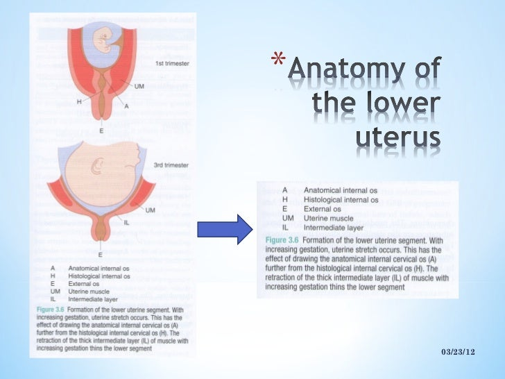Lower uterine segment ...