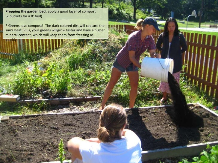 Prepping the garden bed: apply a good layer of compost  <br />(2 buckets for a 8' bed) <br />* Greens love compost!  The d...