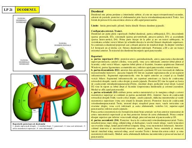 1 DUODENUL Duodenul Duodenul este prima por iune a intestinului subtire; el este un organ retroperitoneal secundar, aderen...