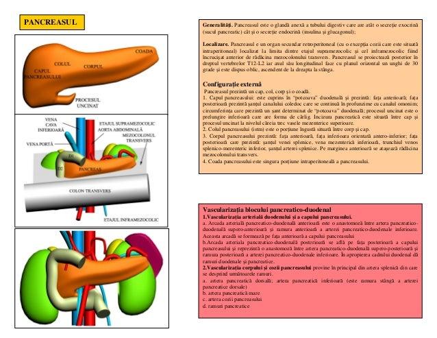 Lp 21 duodenul pancreasul vena porta cai biliare Slide 2
