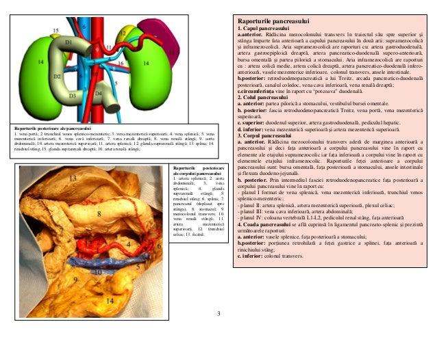 Lp 21 duodenul pancreasul vena porta cai biliare Slide 3