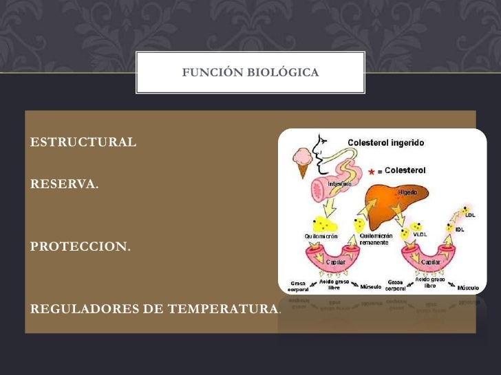 FUNCIÓN BIOLÓGICAESTRUCTURALRESERVA.PROTECCION.REGULADORES DE TEMPERATURA.