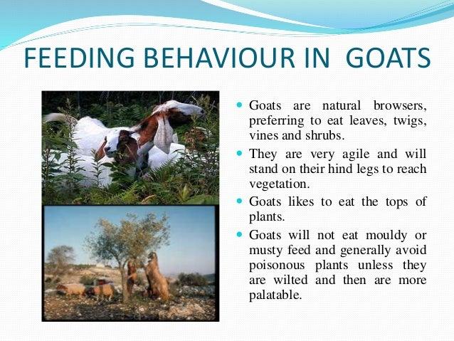 Association for the study of animal behaviour