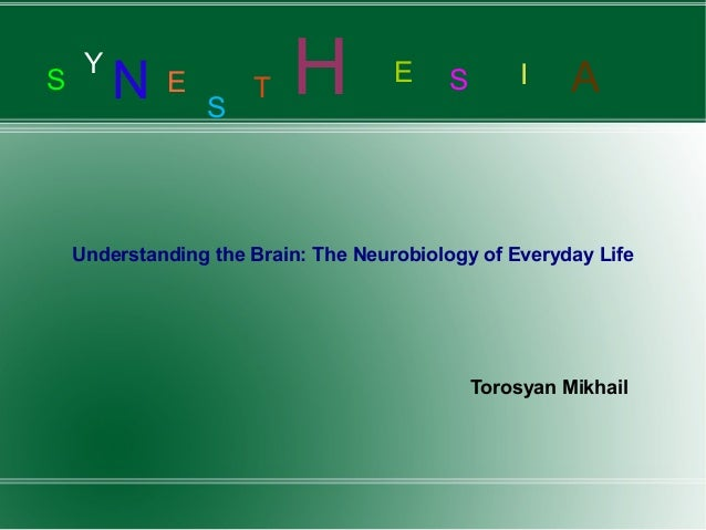 S Y N E S T H E S I A Understanding the Brain: The Neurobiology of Everyday Life Torosyan Mikhail
